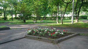 午前7時 中央公園の花壇