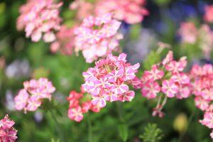午後2時半 北6条の花