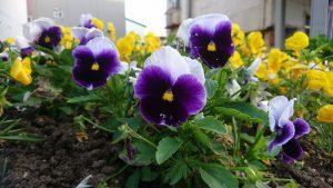 午後5時 apt4の花壇