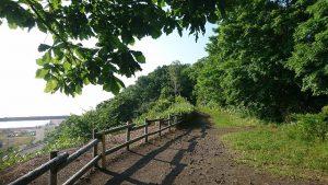 午前7時 駒場木のひろばの散策路