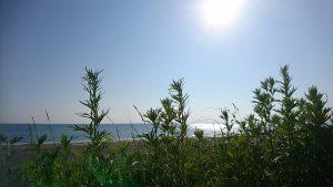 午前7時 藻琴の海岸