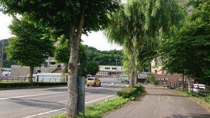 午前7時 新橋そばの街路樹