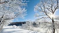 大曲地区の樹氷(1月10日に撮影)【北見・網走のフリーペーパー・経済の伝書鳩|ニュース】