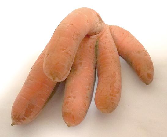 作品名『手!!』北見市・男性 収穫していたら、まるで指のように見えるニンジンが出てきて驚きました。