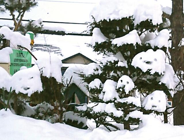 作品名『雪のおばけ』北見市・男性 大雪の後、庭の木に積もった雪がかわいらしく思えて、思わず目をつけて見ました。