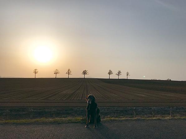 作品名『女満別の夕陽』網走市・ソフィーさん夕陽と愛犬のシルエットが綺麗に撮れましたU^ェ^U