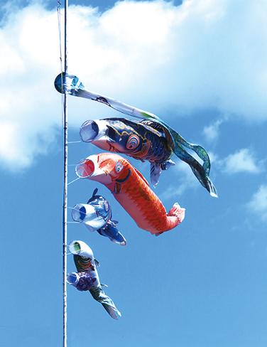 作品名『風に泳ぐ』北見市・女性 強い風に大きな口を開けて、一生懸命泳いでいました。