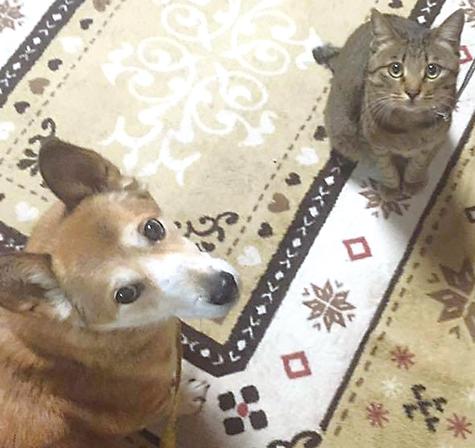 作品名『ケンカするほど仲が良い!?』しょうこ 雑種犬のジャム(オス・16歳)と雑種猫のティオ(オス・2歳)。老犬と若猫のコンビです。猫のティオは犬のジャムに追いかけられて、いつもかけっこ状態。ジャムはもう老犬だけど、若いティオに刺激をもらって元気に過ごしてほしいです。