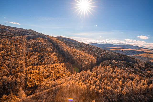作品名『黄金カラマツ』訓子府町・男性 ヘリから撮影しました。普段は木を上から見れないと思うので、新鮮な写真になりました。紅葉したカラマツが黄金色に見えた1枚です。