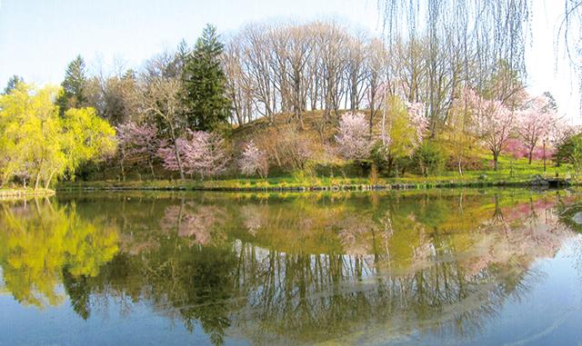 作品名『野付牛公園の湖に映る桜』北見市・男性 5月5日午前5時、目が覚めて窓を開けると雲ひとつない好天。「もしかして野付牛公園に行くと絶景が見られるのでは?」と思い行ってみると、そこには水面に映る桜の美しい光景がありました。