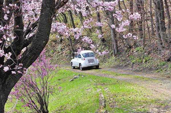 作品名『往年の名車と桜』北見市・きさらぎの写人 普段の散歩コースに近くの小町川沿線があり、そこの桜が5月5日に咲きだしていました。また、緑ヶ丘霊園の一本桜も満開となっておりこれもカメラに収めました。丁度往年の名車スバル360がやってきまして帰りの後ろ姿をとらえてみました。