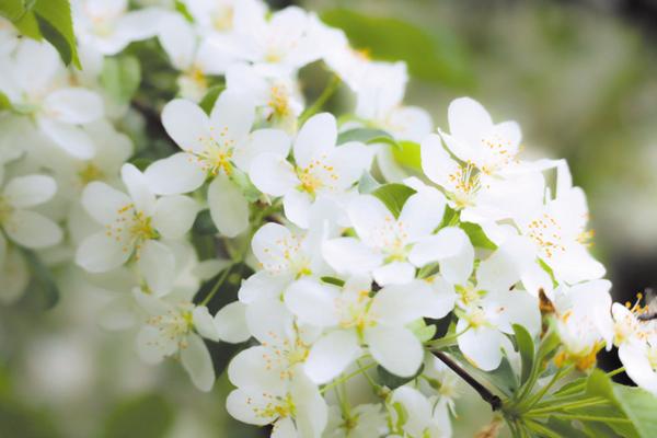 作品名『初夏の訪れ』北見市・moko 北見フラワーパラダイスに満開に咲いていた花で今年も夏が近づいてきているなと思いました。