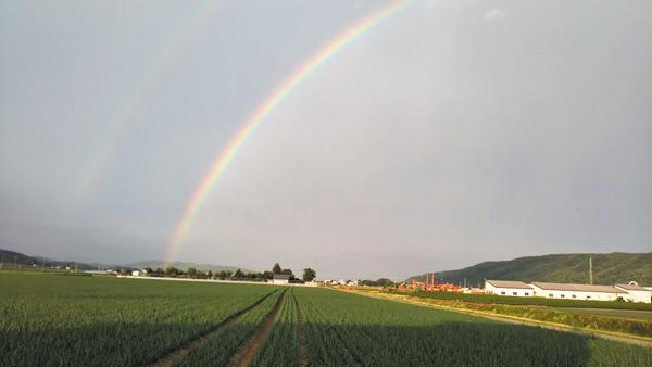 作品名『ダブルレインボー』北見市、猫はかすがいさん 今日の夕方、きれいな虹に感動しました。よく見たら二重にかかっていて、2年ぶりに見たダブルレインボー。良い兆しでありますように。
