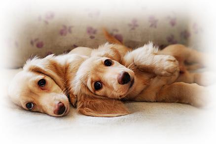 【トリマーさんになりませんか?北海道北見市の「愛犬トリミングスクール」|ペット|美容室|日本ペット美容協会の認定校】愛犬のお手入れは自分で