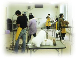 【トリマーさんになりませんか?北海道北見市の「愛犬トリミングスクール」|ペット|美容室|日本ペット美容協会の認定校】