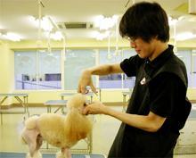 【トリマーさんになりませんか?北海道北見市の「愛犬トリミングスクール」|ペット|美容室|日本ペット美容協会の認定校】男性も入会OK