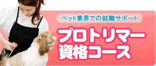 【トリマーさんになりませんか?北海道北見市の「愛犬トリミングスクール」|ペット|美容室|日本ペット美容協会の認定校】プロトリマー資格コース